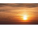 Sunset, Swarm Of Birds