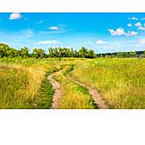 Meadow, Dirt