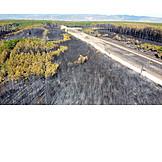 Forest, Destruction, Forest fire