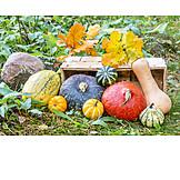 Squash, Harvest