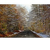 Forest, Winter, Street