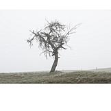 Tree, Fog, Die