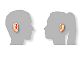 Communication, Listening, Animal Ear