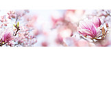 Spring, Magnolia, Magnolia Flower