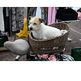 Dog, Bi´cycle Basket