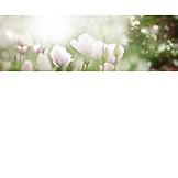 Spring, Sunbeams, Tulips