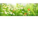 Meadow, Flowers, Spring