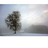 Tree, Winter, Silence