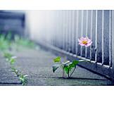 Flower, Asphalt