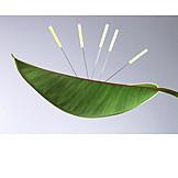 Acupuncture, Acupuncture Needle, Chinese Medicine