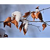 Winter, Autumn Leaves, Snow