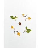 Autumn, Leaves, Flowers, Tree Fruit, Acorn