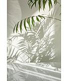 Houseplant, Palm, Shadow