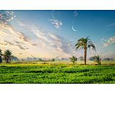 Landwirtschaft, ägypten, Fruchtland
