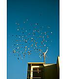 Sky, Swarm Of Birds