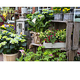 Flowers, Potted Plants, Garden Center