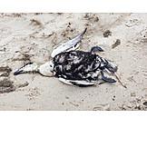 Beach, Dead Animal, Sea Bird