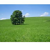 Tree, Meadow