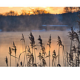 Sunrise, Lake, Grasses, Winter