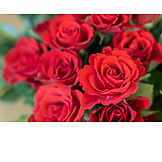Roses, Red Roses, Rose Bouquet
