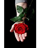 Rose, Gift, Valentine