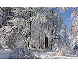 Winter, Winter Landscape, Thuringian Forest