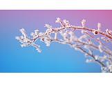 Winter, Twig, Ice Crystals