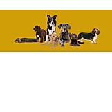 Tiergruppe, Hunde, Hunderasse