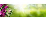 Tulpenstrauß, Muttertag, Blumengeschenk