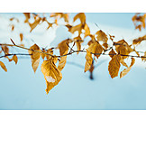 Winter, Leaves