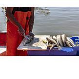 Fishing, Fishing Industry, Fish