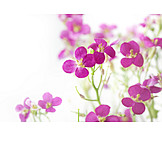 Flower, Flowers, Flowers Bloom