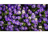 Purple, Flowers