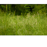 Meadow, Grasses, Wild Meadow