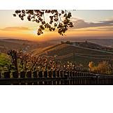 Sunrise, Autumn, Vineyard
