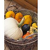 Ornamental Gourd, Thanksgiving, Pumpkins