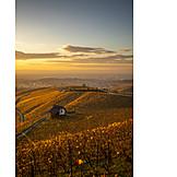 Sunset, Autumn, Vineyard