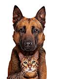 Cat, Dog