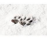Snow, Footprint, Paw