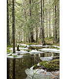 Forest, Winter, Ice, Water