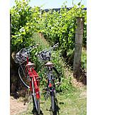 Vineyard, Bicycles