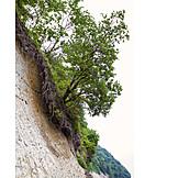 Tree, Growth, Cliff