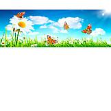 Summer, Daisy, Butterflies