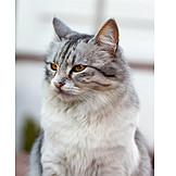 Animal Portrait, Cat