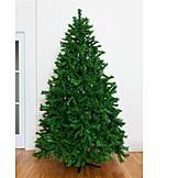Christmas Tree, Fir Tree