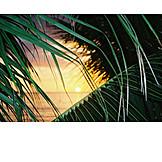 Sunset, Beach, Palm Leaf, Caribbean