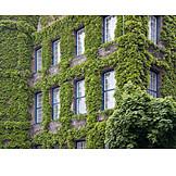 House, Vine Leaves