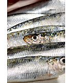 Prepared Fish, Raw Fish, Fresh Fish, Sardine