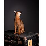 Cat, Suitcase