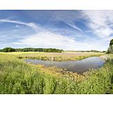 Spring, Meadow, Pond